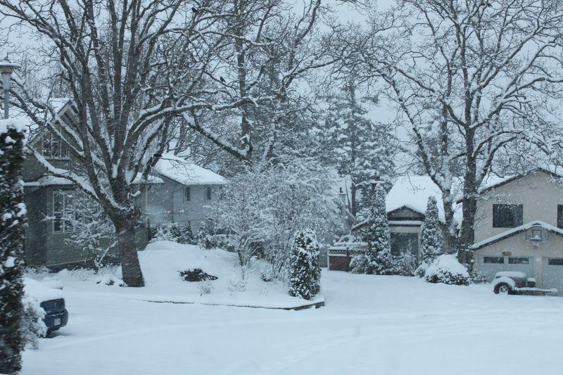 SNOWDAY 086